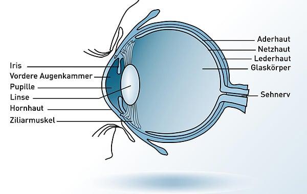 Auge Anatomie Augenlaser